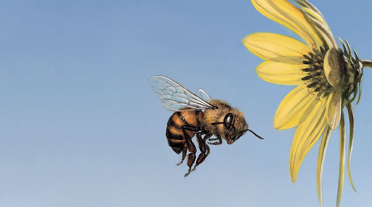 In Praise of the Honeybee