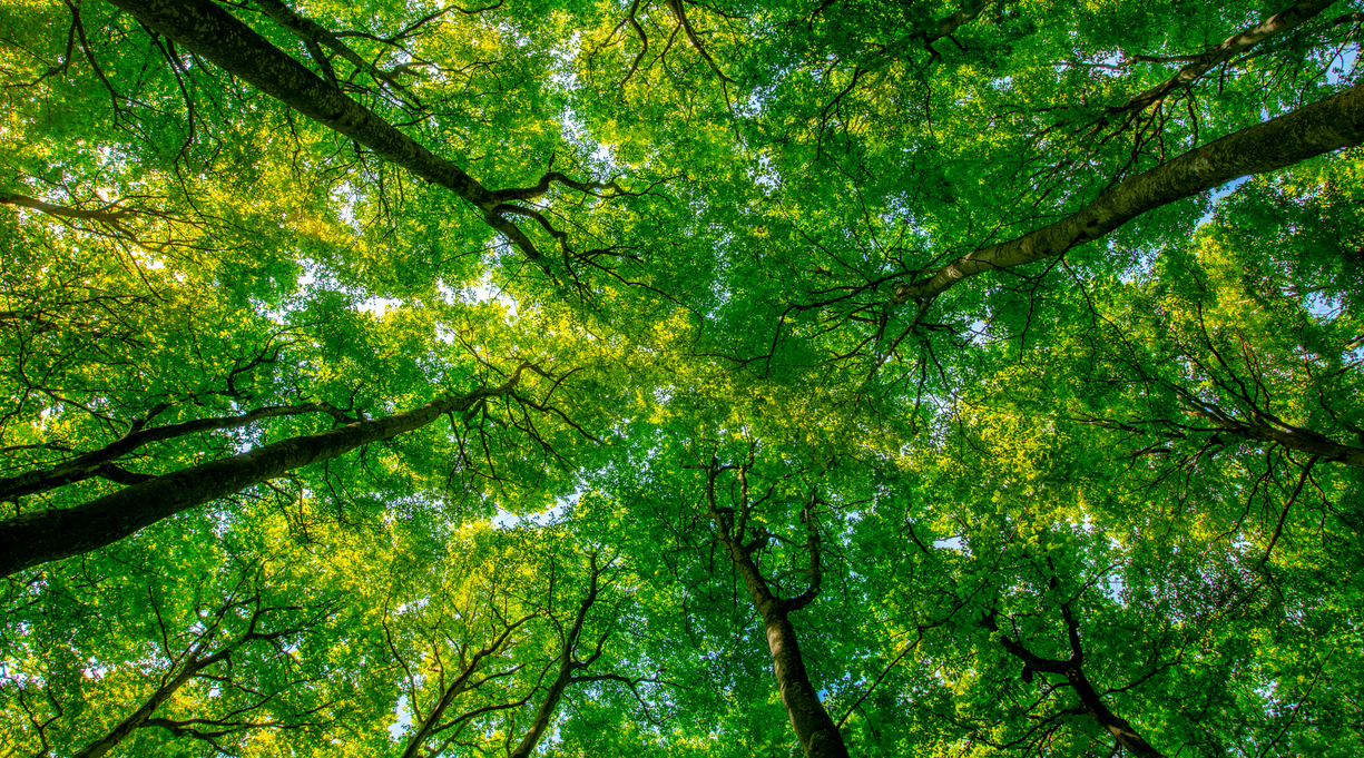 3 New Nonfiction Books for Nature Lovers
