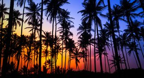 This Novelist's Hawaii: Hardscrabble, Mystical