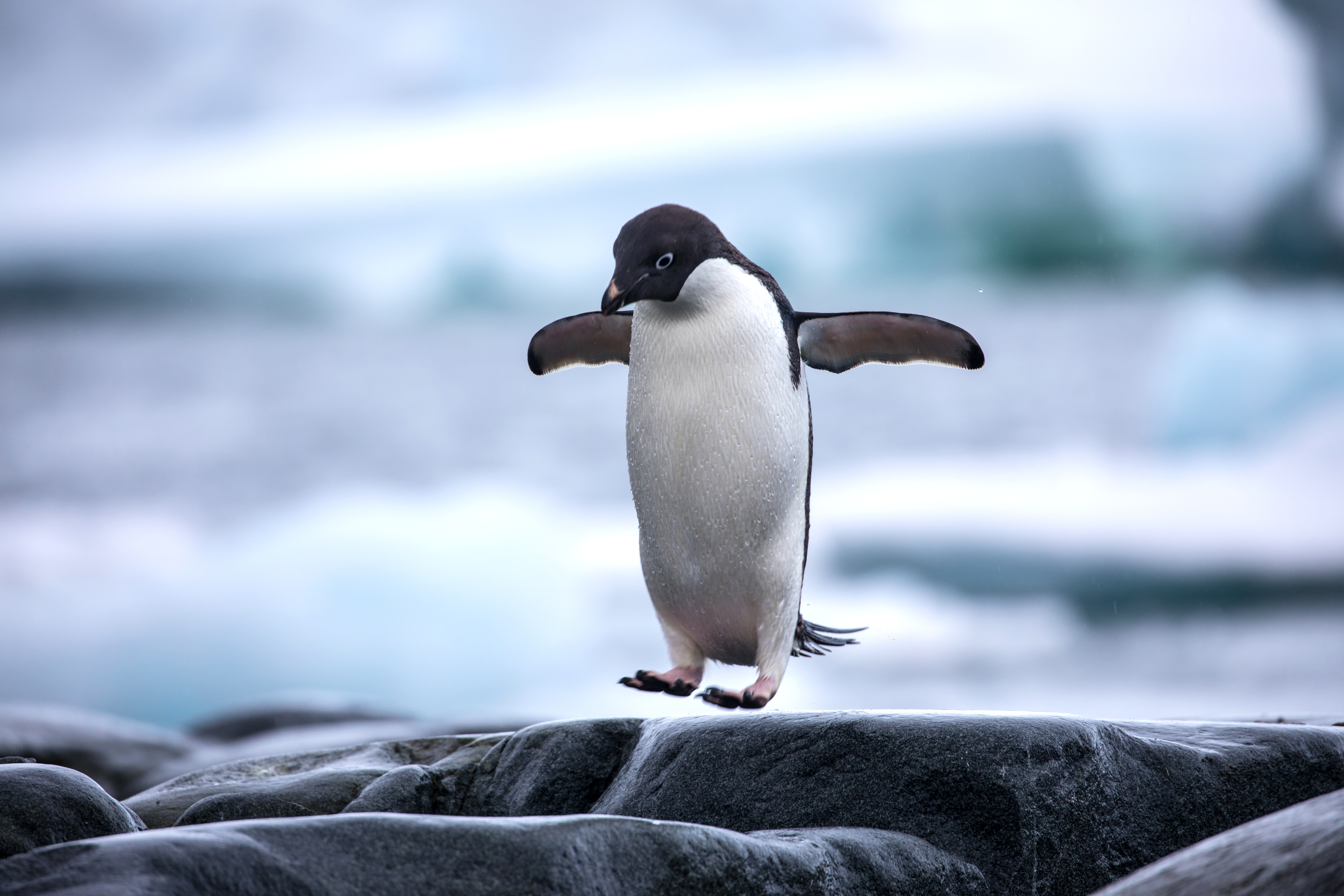 Penguin Random House Hires Penguin as Intern