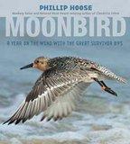'Moonbird': The Poster Boy for Shorebirds